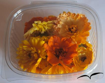 Caixa de 16 flores de margaridas