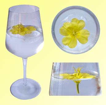 cocktail_estrela_da_tarde