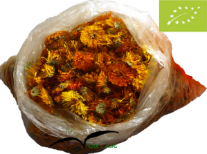 Flores biológicas secas de Calendula officinalis/ Organic Dried Flowers from Calendula officinalis