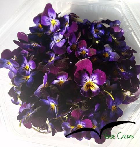 Flores Comestíveis BIO