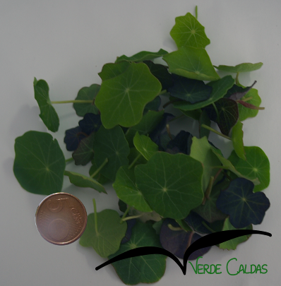 Micro folhas de chagas 20g