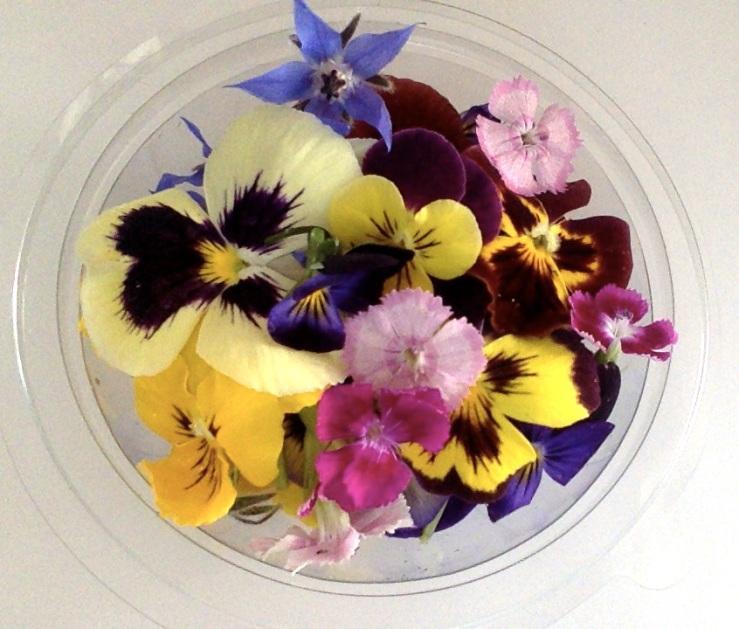 mini mix Flores Comestíveis_ Verde Caldas