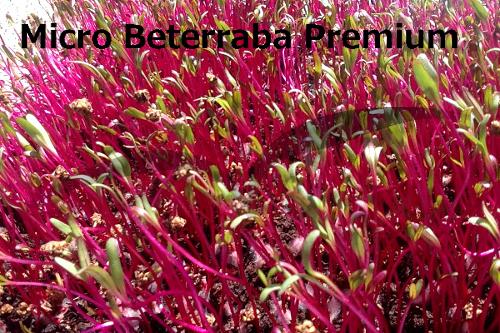 micro beterraba Premium