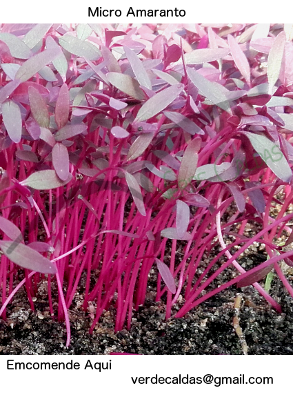 micro-amaranto