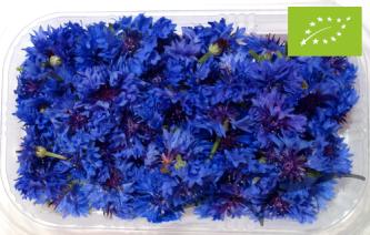 Flores de Centaureas 80 unidades