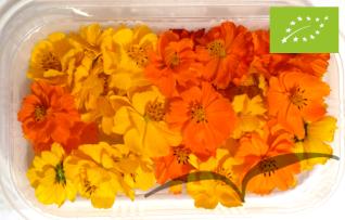 Flores de Cosmos 40 unidades
