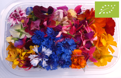 Mix de Flores médias