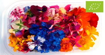 Mix Flores Médias googleads